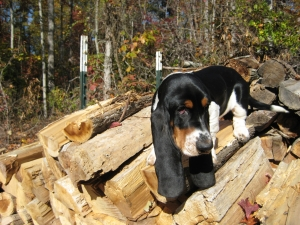 I can help cut wood too.