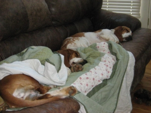 Molly and Dasiey snoozing on the couch!